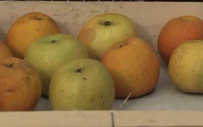 Philippe Delerm : L'odeur des pommes