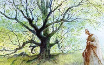 Jean Giono : L'homme qui plantait des arbres (1)